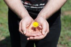 Малый цветок в мужских руках Стоковое фото RF