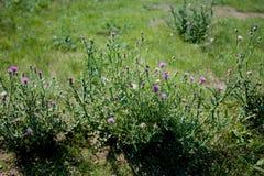 Малый цветок в поле Стоковые Изображения