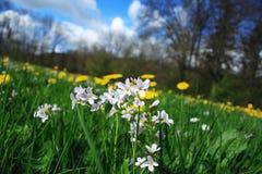 Малый цветок в forrest Стоковое Изображение