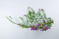 Малый цветок ложного вереска Стоковое Изображение