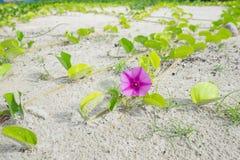 Малый цветок пинка дерева Стоковое Фото