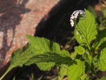 Малый цветок стоковые фото