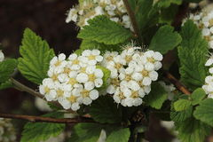 Малый цветок Стоковая Фотография