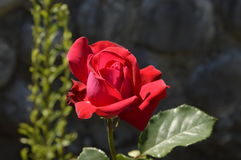 Малый цветок Стоковые Изображения
