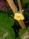 Малый цветок Стоковое Изображение RF