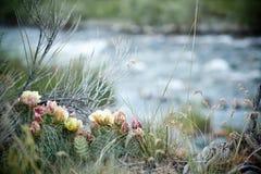 Малый цветя кактус Стоковое Изображение
