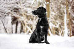 Малый щенок в лесе Стоковое Изображение