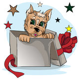 Малый щенок в подарочной коробке Стоковые Фото