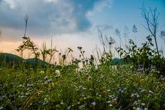 Малый beautyful цветок Стоковая Фотография RF