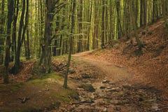 Малый Bypath леса Стоковые Фото