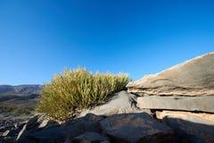 Малый spiky округленный безлистный кустарник Стоковое фото RF