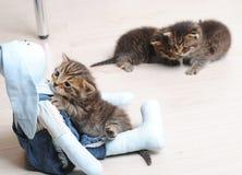 Малый striped котенок 3 Обнимать зайца игрушки Стоковое Изображение