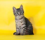 Малый striped котенок сидя на желтом цвете Стоковая Фотография RF