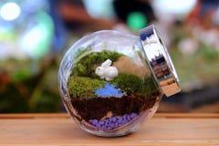 Малый terrarium в стеклянном опарнике на рынке Стоковое Изображение