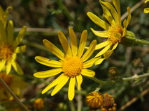 Малый wildflower Стоковые Изображения