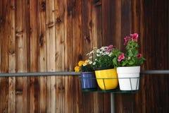 3 малых бака цветков Стоковое Фото