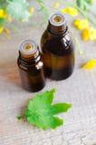 2 малых бутылки выдержки эфирного масла травяной, тинктуры, вливания Стоковая Фотография RF