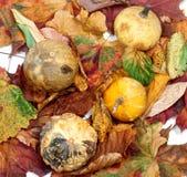 4 малых декоративных тыквы на листьях осени Стоковое фото RF