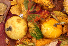 2 малых декоративных тыквы на листьях осени multicolor Стоковая Фотография
