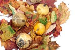4 малых декоративных тыквы на листьях осени multicolor Стоковые Фото