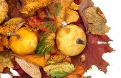 2 малых декоративных тыквы на листьях осени multicolor Стоковые Фото