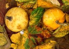 2 малых декоративных тыквы на листьях сухой осени multicolor Стоковое Изображение RF