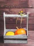 2 малых декоративных тыквы Стоковое фото RF
