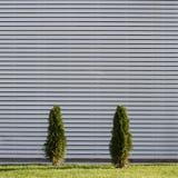 2 малых зеленых дерева с белыми деревянными планками на заднем плане Стоковые Фото
