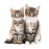 2 малых котят Стоковая Фотография