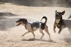 2 малых собаки играют с шариком на пылевоздушной спортивной площадке стоковая фотография