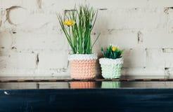 2 малых цветка в цветочных горшках на деревянной полке Стоковая Фотография RF