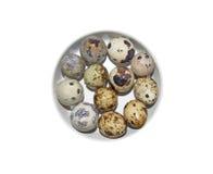 12 малых яичек триперсток Стоковое Изображение RF
