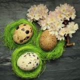 3 малых яичка триперсток в бортовых крошечных зеленых гнездах с ослаблять fl Стоковое фото RF