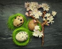 3 малых яичка триперсток в бортовых крошечных зеленых гнездах с ослаблять Стоковое Изображение