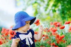 Малыш собирая маки стоковая фотография rf