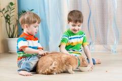 Мальчики детей подавая красный кот стоковое фото