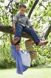 Мальчики играя на ветви дерева Стоковая Фотография