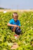 Мальчик в поле клубники стоковые фотографии rf