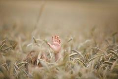 Мальчик в пшеничном поле стоковое фото rf