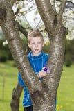 Мальчик готовя дерево с собранием полевых цветков Стоковая Фотография RF