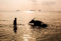 Мальчик и буйвол купая в море Стоковое Фото