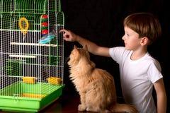 Мальчик и кот смотря волнистый попугая Стоковое Изображение