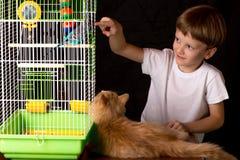 Мальчик и кот смотря волнистый попугая Стоковая Фотография RF