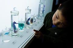 Мальчик наблюдая образец лошади моря стоковое фото rf