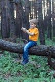 Мальчик на дереве Стоковая Фотография RF