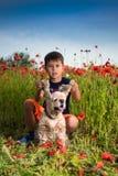 Мальчик представляя на поле мака с собакой Стоковые Изображения RF