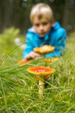 Мальчик ребенка рассматривает toadstools в лесе Стоковая Фотография RF