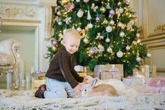 Мальчик сидит под деревом и Пэт зайчик Стоковое фото RF