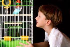 Мальчик смотрит клетку с budgies Стоковое Фото