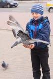 Мальчик с голубями стоковая фотография